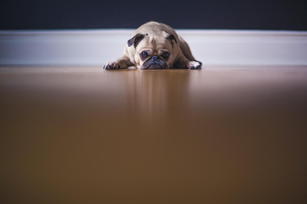 Livmoderbetændelse hos hund  Læs alt om livmoderbetændelse hos hund her