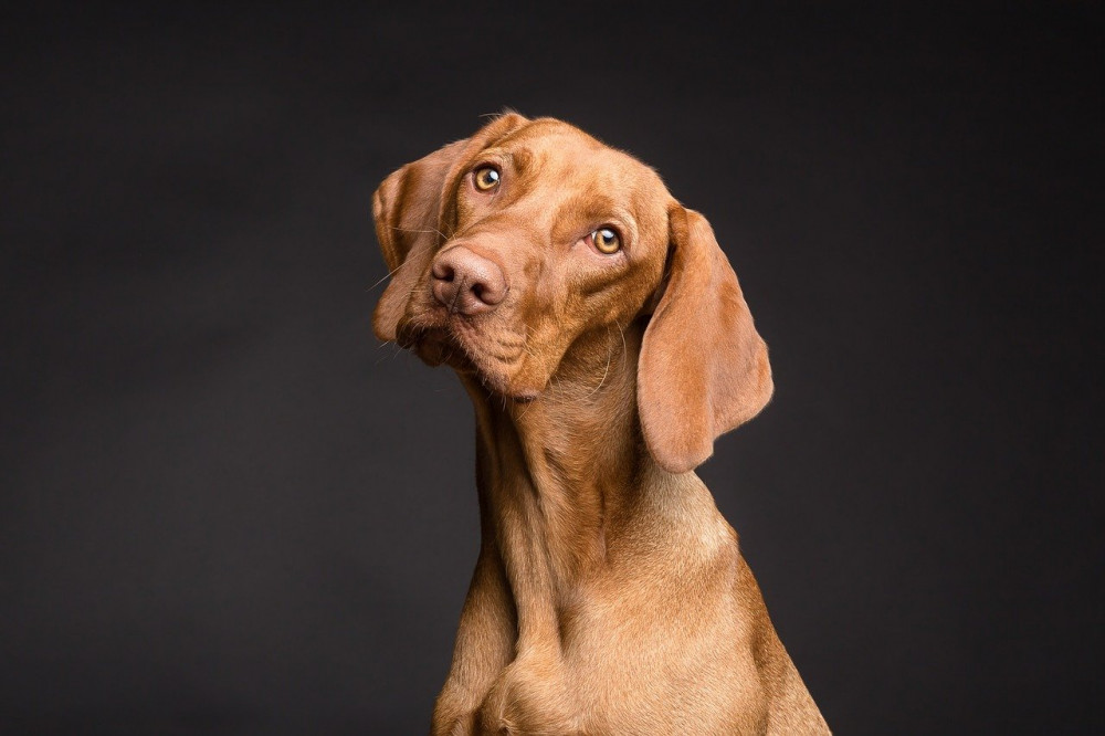 Handyhund