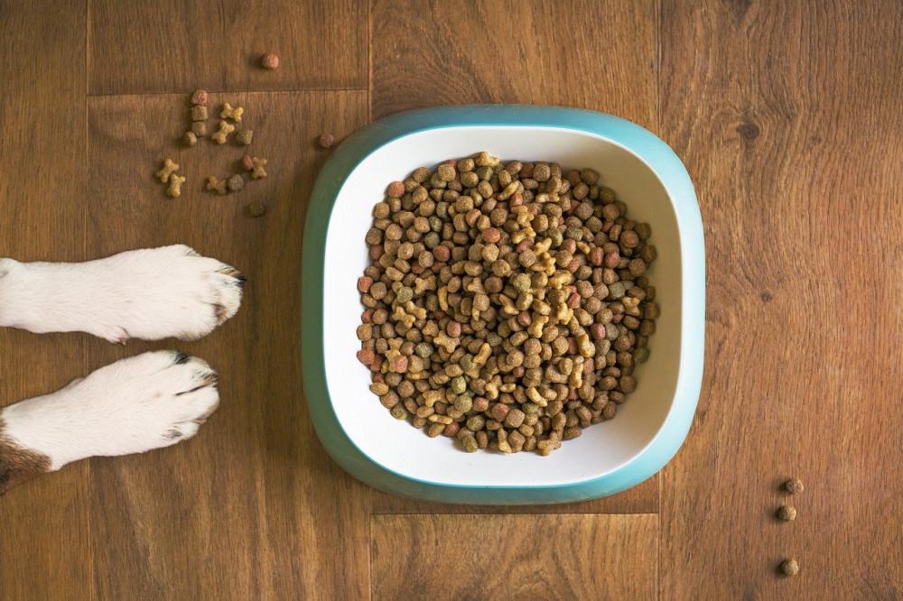 Fem ting du aldrig må fodre din hund med