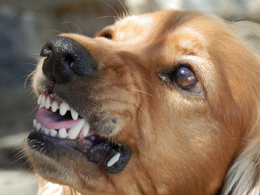 Gode råd til at stoppe hundeangreb fra en aggressiv hund