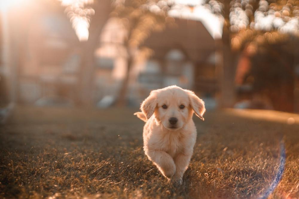 Finansiering af ny hund: Dette skal du være opmærksom på