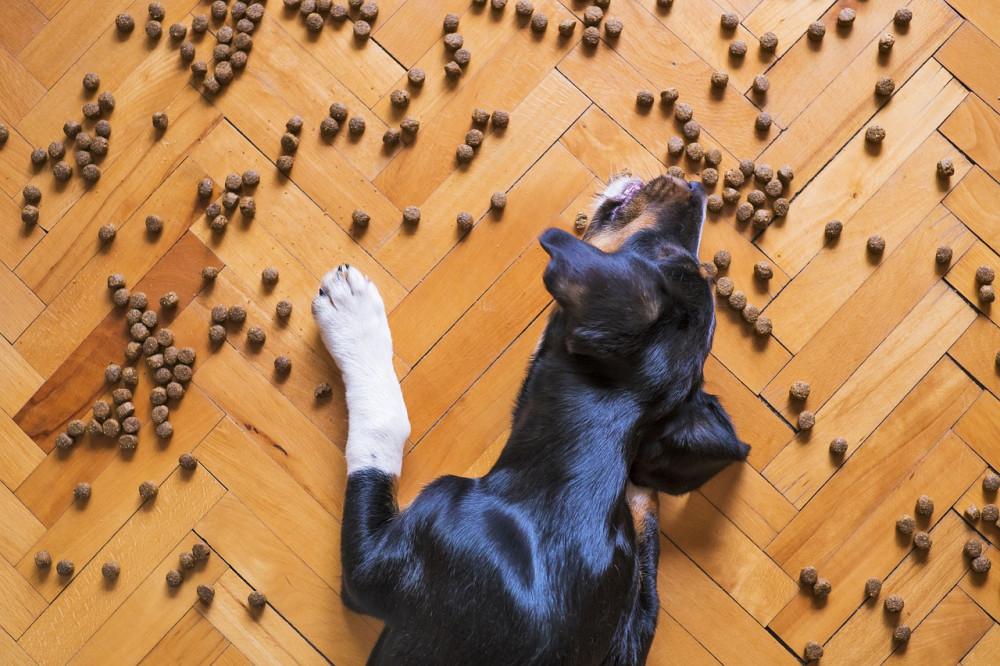 Giv din hund et langt og godt liv med godt foder