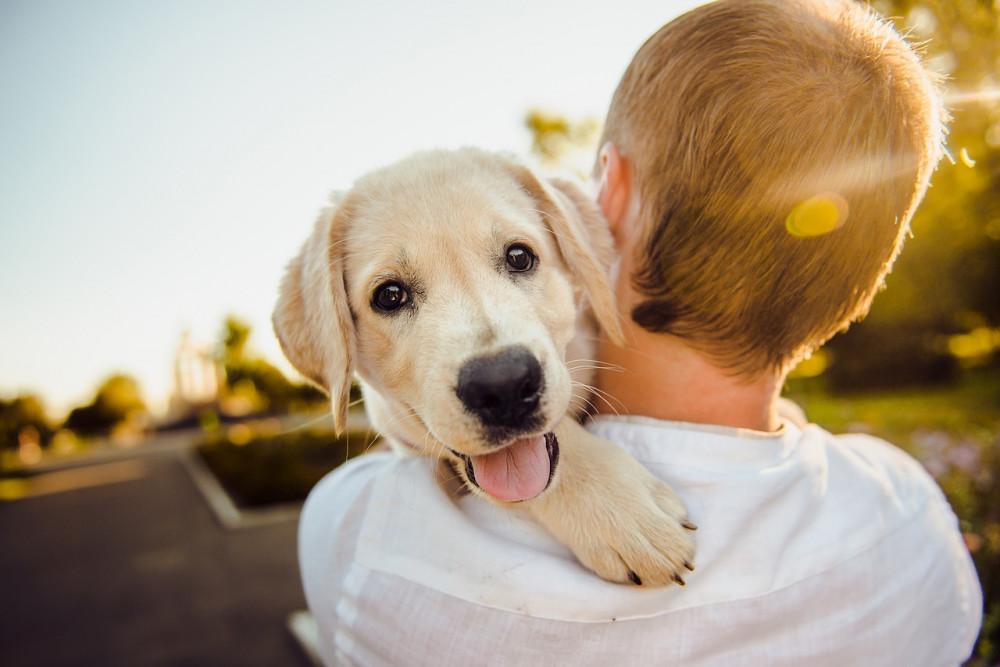 Gør det bedste for din hund