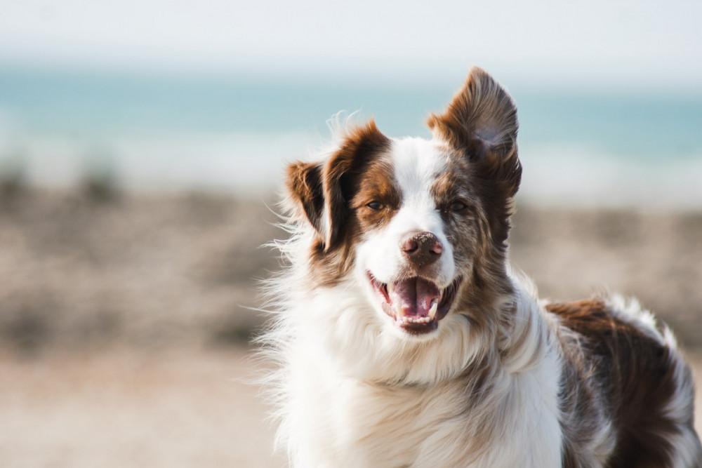 Bliv klogere på kornfrit hundefoder