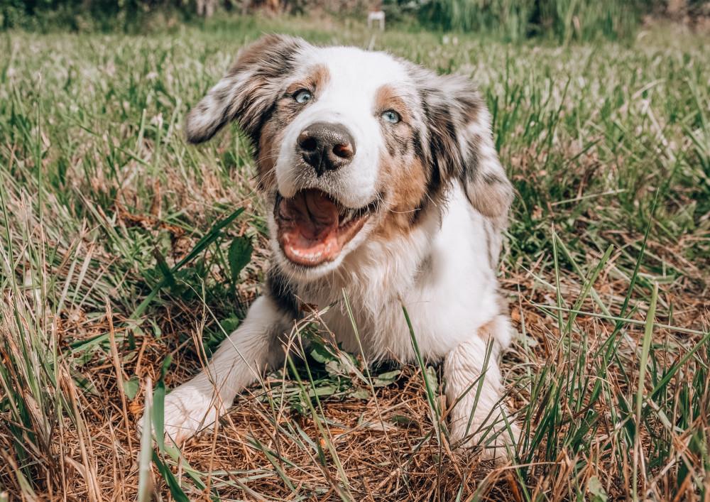 Tre gode råd til, hvordan du kan gøre din hund glad