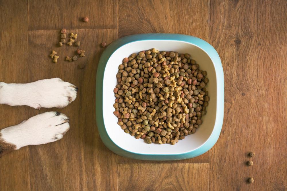 Vælg et godt kvalitets hundefoder