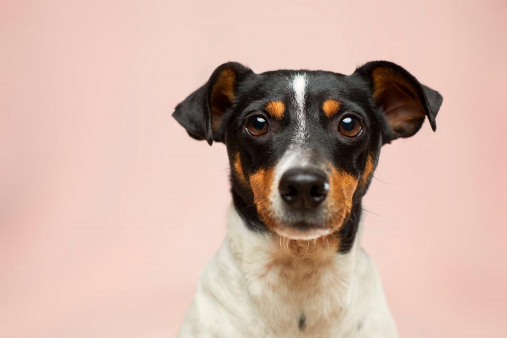 Sådan lindrer du dine hunds smerter  læs mere online her