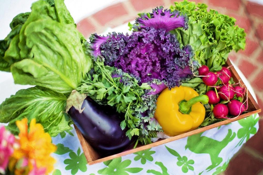 Hvad ved du egentlig om ernæring og kost? Få mere viden her.
