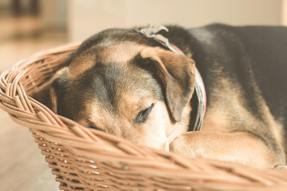 Inspirationsguide til køb af den bedste hundekurv