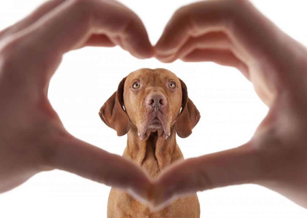 Lav din research inden du vælger din hund så du vælger rigtigt